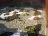 Aranjamente Plante Cu Piatra Scoarta Ornamentala - 10002 Aranjamente Plante Cu Piatra Scoarta Ornamentala