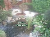 Aranjamente Plante Cu Piatra Scoarta Ornamentala - 10007 Aranjamente Plante Cu Piatra Scoarta Ornamentala