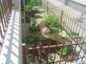 Aranjamente Plante Cu Piatra Scoarta Ornamentala - 10008 Aranjamente Plante Cu Piatra Scoarta Ornamentala