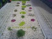Aranjamente Plante Cu Piatra Scoarta Ornamentala - 10021 Aranjamente Plante Cu Piatra Scoarta Ornamentala