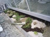 Aranjamente Plante Cu Piatra Scoarta Ornamentala - 10032 Aranjamente Plante Cu Piatra Scoarta Ornamentala