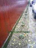 Aranjamente Plante Cu Piatra Scoarta Ornamentala - 10036 Aranjamente Plante Cu Piatra Scoarta Ornamentala