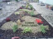 Aranjamente Plante Cu Piatra Scoarta Ornamentala - 10037 Aranjamente Plante Cu Piatra Scoarta Ornamentala