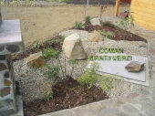 Aranjamente Plante Cu Piatra Scoarta Ornamentala - 10040 Aranjamente Plante Cu Piatra Scoarta Ornamentala