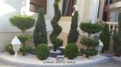 Aranjamente Plante Cu Piatra Scoarta Ornamentala - 10080 Aranjamente Plante Cu Piatra Scoarta Ornamentala