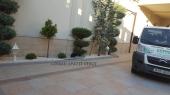 Aranjamente Plante Cu Piatra Scoarta Ornamentala - 10081 Aranjamente Plante Cu Piatra Scoarta Ornamentala
