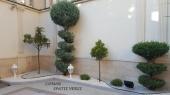 Aranjamente Plante Cu Piatra Scoarta Ornamentala - 10082 Aranjamente Plante Cu Piatra Scoarta Ornamentala