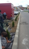 Aranjamente Plante Cu Piatra Scoarta Ornamentala - 10086 Aranjamente Plante Cu Piatra Scoarta Ornamentala