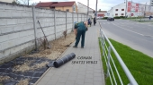 Aranjamente Plante Cu Piatra Scoarta Ornamentala - 10087 Aranjamente Plante Cu Piatra Scoarta Ornamentala