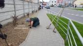 Aranjamente Plante Cu Piatra Scoarta Ornamentala - 10088 Aranjamente Plante Cu Piatra Scoarta Ornamentala