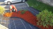 Aranjamente Plante Cu Piatra Scoarta Ornamentala - 10090 Aranjamente Plante Cu Piatra Scoarta Ornamentala